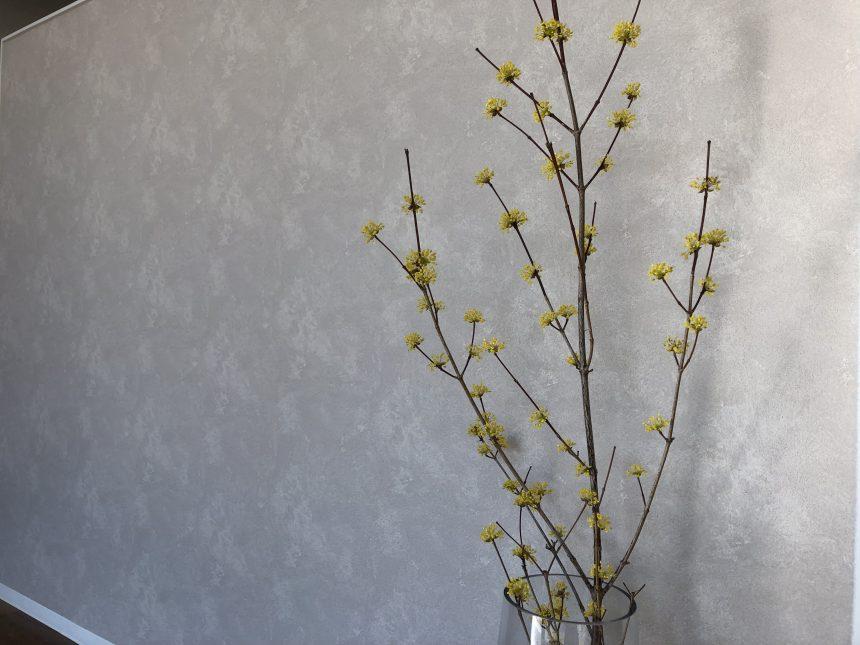 ミズキ科のお花『山茱萸』です。(サンシュユ)