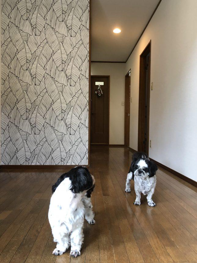 クロス貼替え 内装工事 犬と暮らす イヌとの家